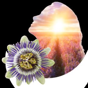 Seelenruhe innerer Frieden Passionsblume